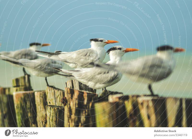Möwen, die in gleichmäßigen Reihen auf Baumstümpfen sitzen Schnabel Stumpf orange Vogel Tierwelt weiß MEER Natur wild Feder Meer Himmel Fauna Federn Flügel grau