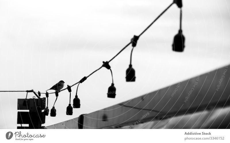 Vogel auf Draht sitzend mit Glühbirnen klein Licht Knolle hölzern Raum Natur Landschaft Himmel reisen Feder winzig Tier Arten Lebensraum elektrisch Gefieder