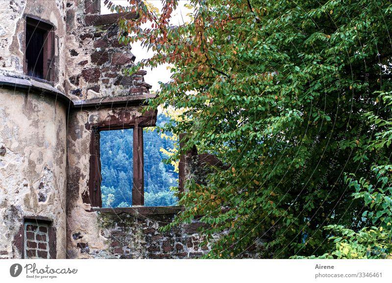 nichts dahinter blau grün Fenster kalt Traurigkeit trist Vergänglichkeit kaputt historisch Vergangenheit Turm violett Verfall Ruine Zerstörung bewachsen