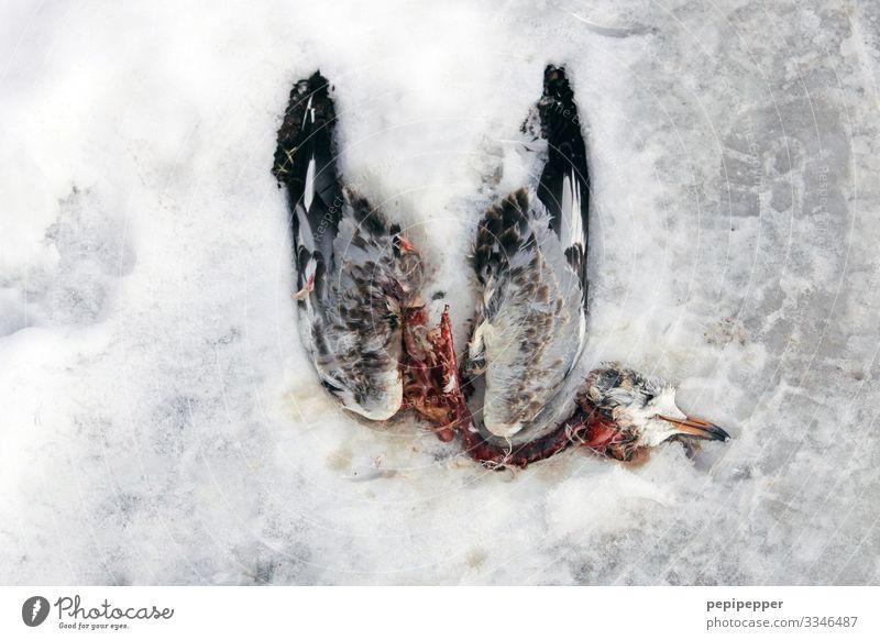 tote Taube Winter Klima schlechtes Wetter Eis Frost Schnee Park Tier Wildtier Totes Tier Vogel 1 alt frieren dehydrieren gruselig Gefühle Mitgefühl Trauer Tod