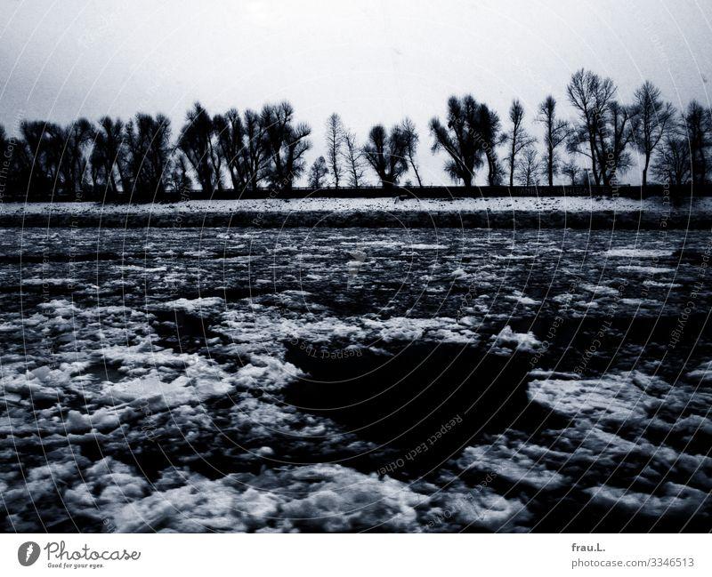 Eiselbe Umwelt Natur Landschaft Frost Schneefall Baum Flussufer Hamburg Hafenstadt kalt Winter Eisscholle Mauer Schwarzweißfoto Außenaufnahme Tag Dämmerung