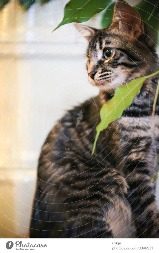 Katzenkind mit Zimmerpflanze Hauskatze Katzenbaby Farbfoto Textfreiraum grün Tigerfellmuster grau niedlich hocken Blick Pflanze Blatt Innenaufnahme