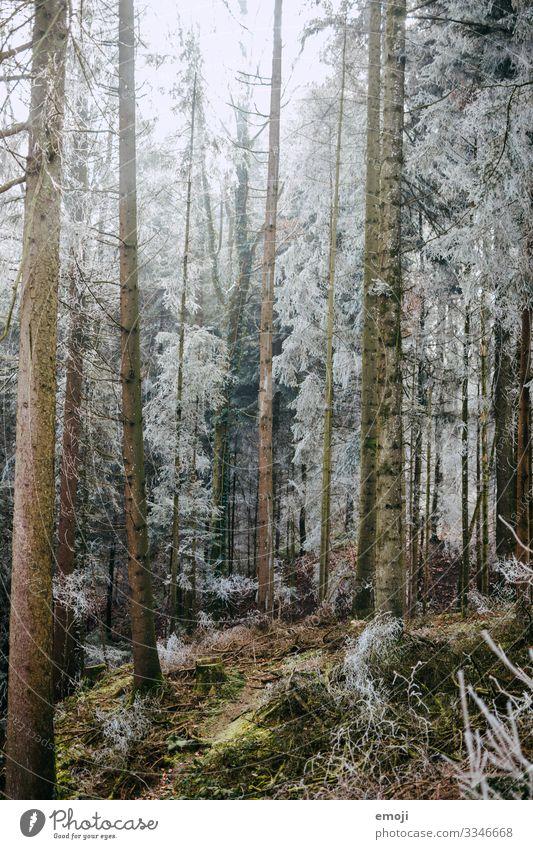 Frost Wald Umwelt Natur Landschaft Pflanze Winter Baum kalt weiß Farbfoto Gedeckte Farben Außenaufnahme Menschenleer Tag Schwache Tiefenschärfe mystisch