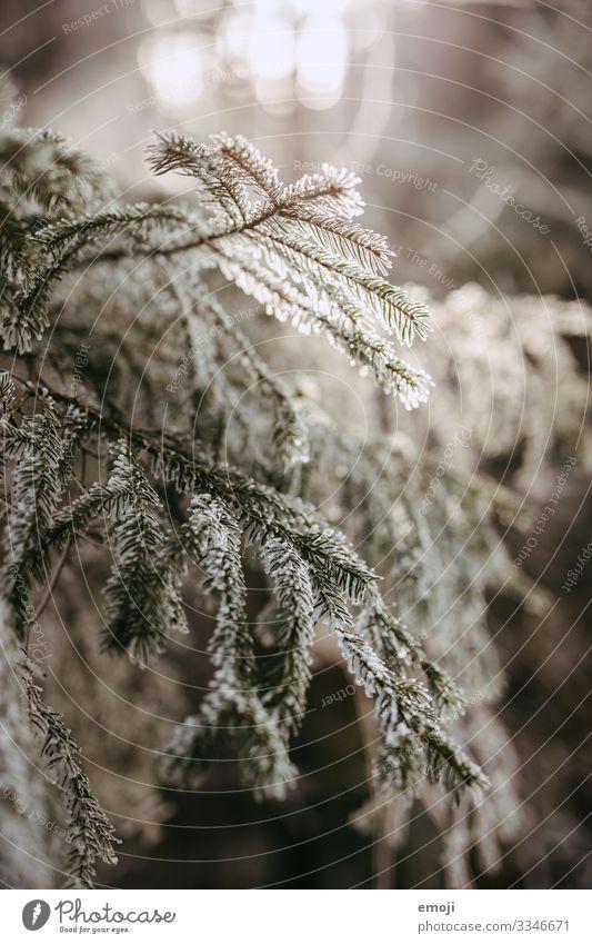 Frost Äste Gegenlicht Umwelt Natur Pflanze Winter Baum Wald kalt weiß Farbfoto Gedeckte Farben Außenaufnahme Menschenleer Tag Schwache Tiefenschärfe mystisch