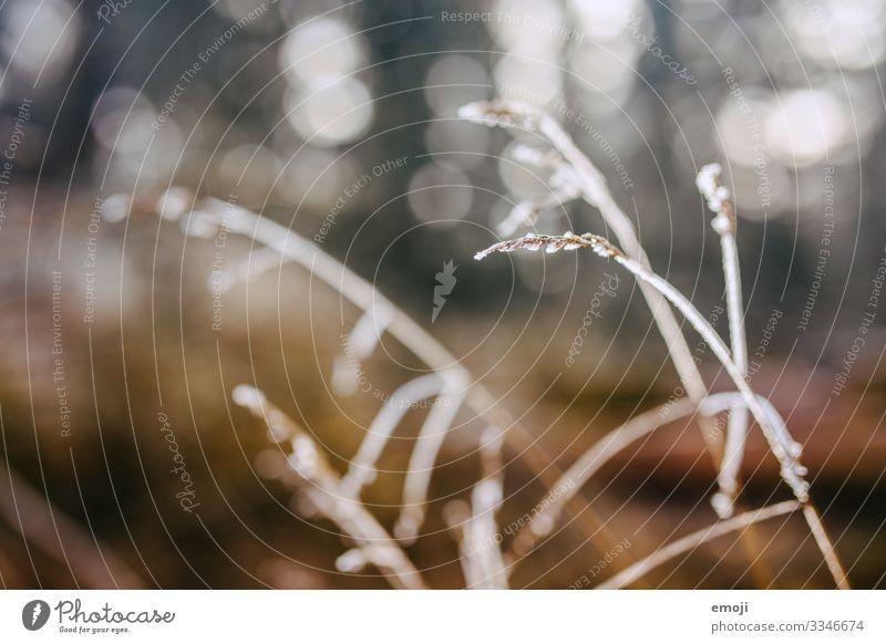 Frost/Tau im Gegenlicht Natur Pflanze Winter Schönes Wetter Gras Sträucher braun Farbfoto mehrfarbig Außenaufnahme Nahaufnahme Detailaufnahme Makroaufnahme