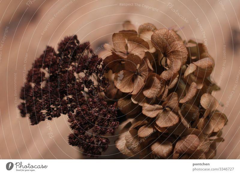 Braune Trockenblumen vor braunem Holz mit Maserung Häusliches Leben einrichten Dekoration & Verzierung ästhetisch schön trocken Blume Ton-in-Ton Stillleben