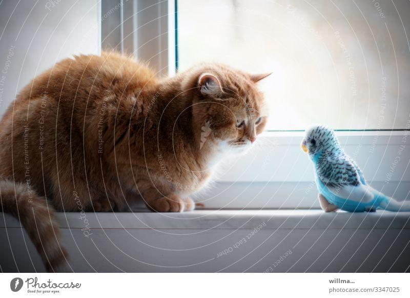 Katze hypnotisiert einen Wellensittich Fenster Haustier beobachten sitzen hypnotisch hypnotisieren Blick Tierporträt