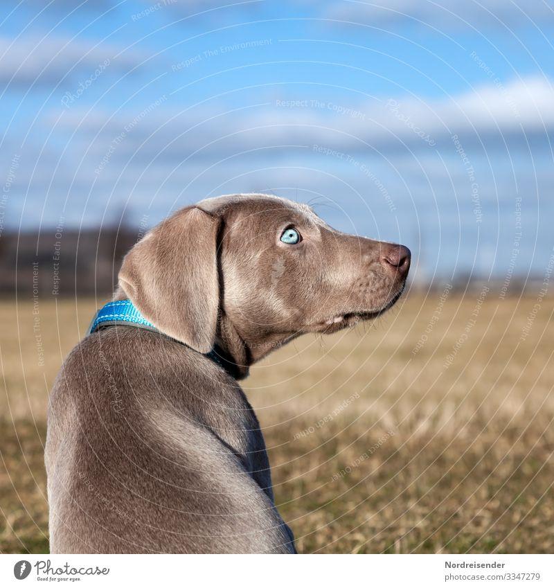 Ich bin dein Vollzeitjob Leben Freizeit & Hobby Jagd Ausflug Natur Himmel Wolken Schönes Wetter Gras Wiese Feld Tier Haustier Hund beobachten frech klein blau