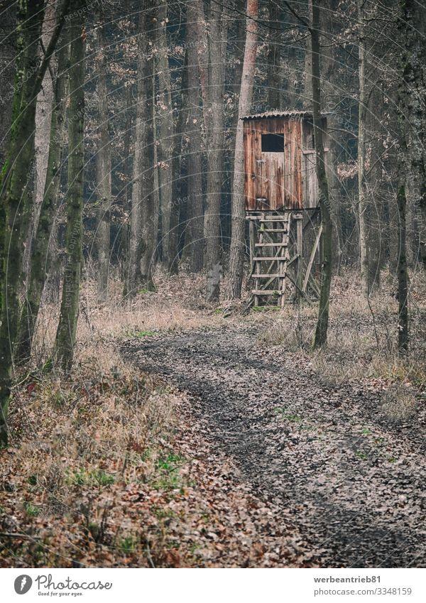 Typischer brauner hölzerner deutscher Jägersitz im Wald Umwelt Natur Herbst Winter bauen beobachten Jagd dreckig Deutsch Deutschland ruhig Gebäude Baum