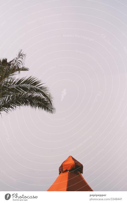 Zeltdach Ferien & Urlaub & Reisen Tourismus Ausflug Abenteuer Ferne Safari Sommer Sommerurlaub Himmel Wolkenloser Himmel Schönes Wetter Pflanze Baum Blatt