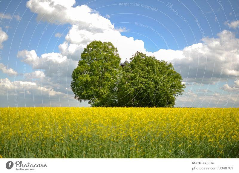 Rapsfeld mit Wasserturm und Bäumen Umwelt Natur Landschaft Pflanze Himmel Wolken Frühling Feld Dorf Turm blau gelb grün Rapsöl Baum Wolkenhimmel Ackerbau