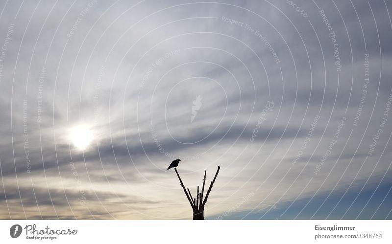 Warten auf ... Himmel Wolken Ast Zweige u. Äste Tier Vogel 1 warten frei blau grau Sehnsucht sitzen Blick Krähe Rabenvögel Farbfoto Gedeckte Farben