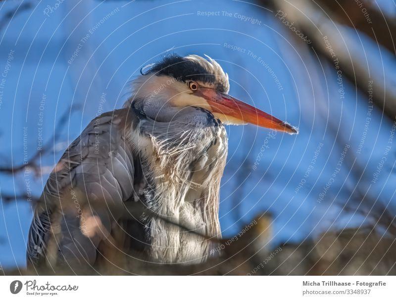 Graureiher im Baum Natur Tier Himmel Sonnenlicht Schönes Wetter Zweige u. Äste Wildtier Vogel Tiergesicht Flügel Reiher Schnabel Kopf Auge Feder gefiedert 1