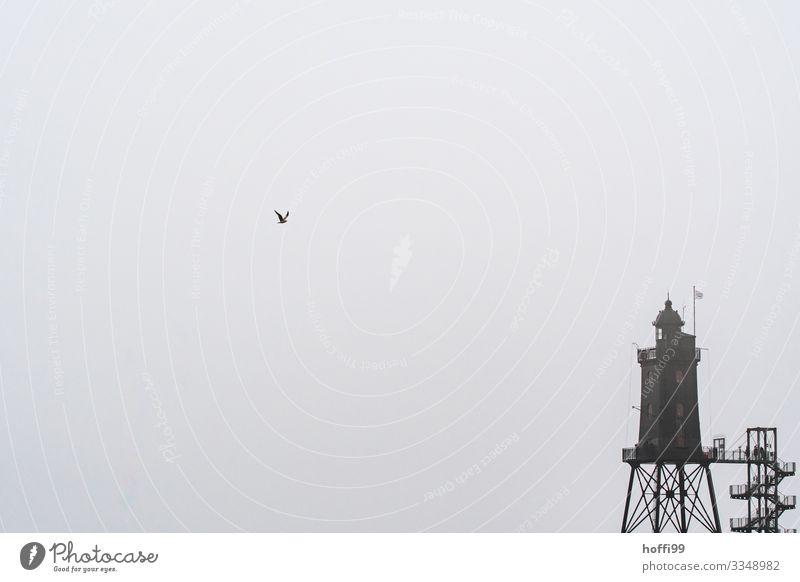 Möwe im Anflug Herbst Winter schlechtes Wetter Nebel Küste Nordsee Bauwerk Leuchtturm Treppe Fassade Dach kalt nass trist grau Sehnsucht Fernweh Einsamkeit