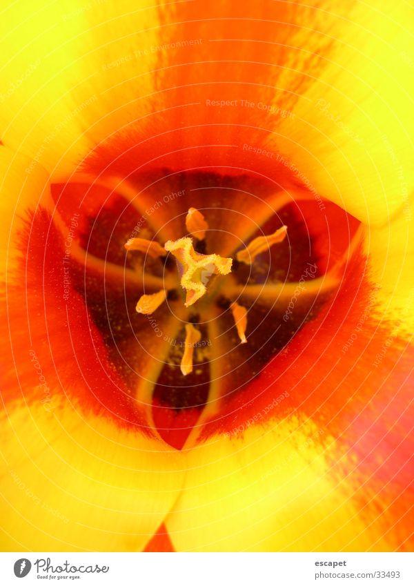 Blüte gelb Sommer Blume Makroaufnahme Natur