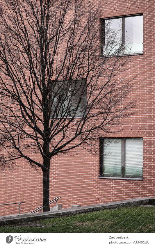 Fassade, Baum und Begrünung Gras Rasen Berlin Haus Bauwerk Gebäude Mauer Wand Fenster stehen kalt trist rot standhaft Langeweile Erschöpfung Traurigkeit kahl