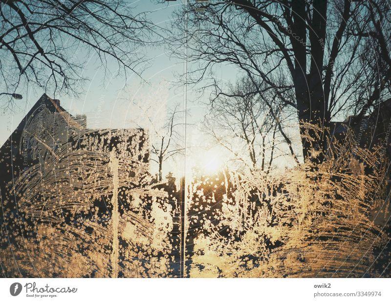 Kühlhaus Umwelt Wolkenloser Himmel Sonne Winter Schönes Wetter Eis Frost Baum Zweige u. Äste Bautzen Haus Dach Glasscheibe leuchten kalt gefroren Eisblumen