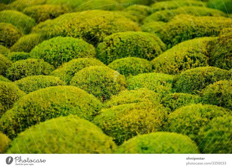 Einfach moosig Natur Pflanze Klima Moos Grünpflanze Hügel außergewöhnlich grün exotisch Farbe Kreativität Moosteppich mehrfarbig Innenaufnahme Nahaufnahme