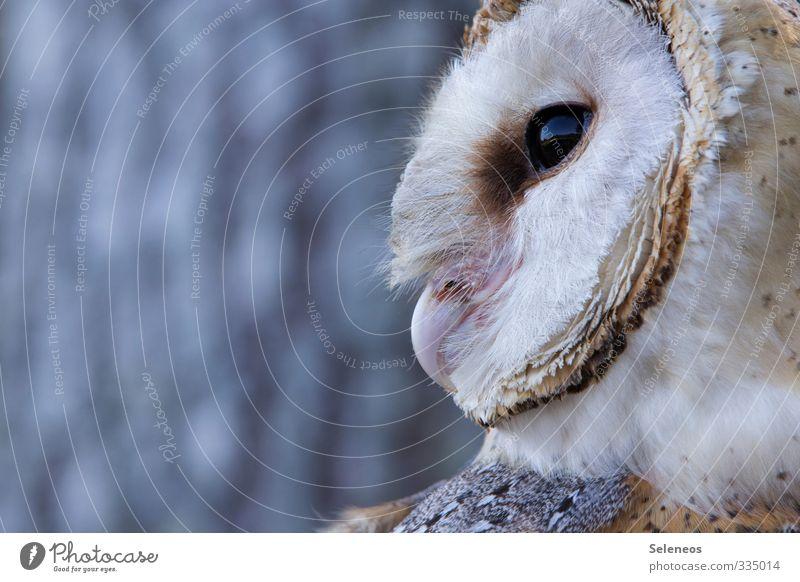 Schleiereule Natur Baum Tier Ferne Umwelt Freiheit Vogel wild Wildtier Abenteuer nah Tiergesicht Weisheit Eulenvögel
