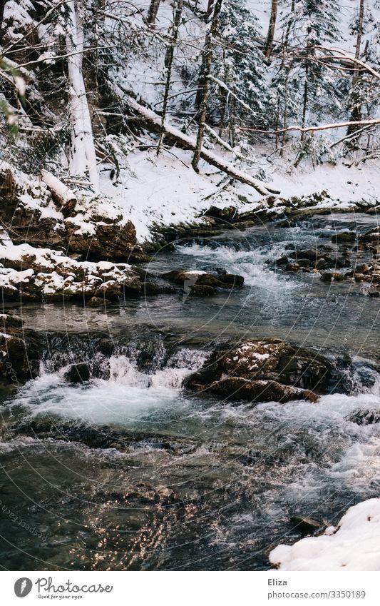 Eiszeit Landschaft Winter Frost Schnee Bach Fluss Natur Wald Gischt kalt Wasser fließen Farbfoto Außenaufnahme Menschenleer Textfreiraum unten Sonnenlicht