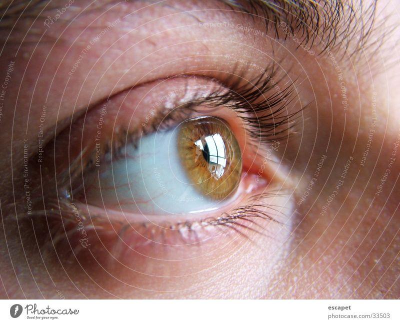 Augenschein Frau Mensch