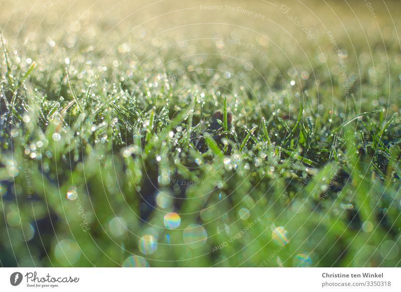 glitzernder gefrorener Rasen im Gegenlicht Umwelt Natur Wassertropfen Frühling Winter Pflanze Gras Blatt ästhetisch außergewöhnlich glänzend hell nah natürlich