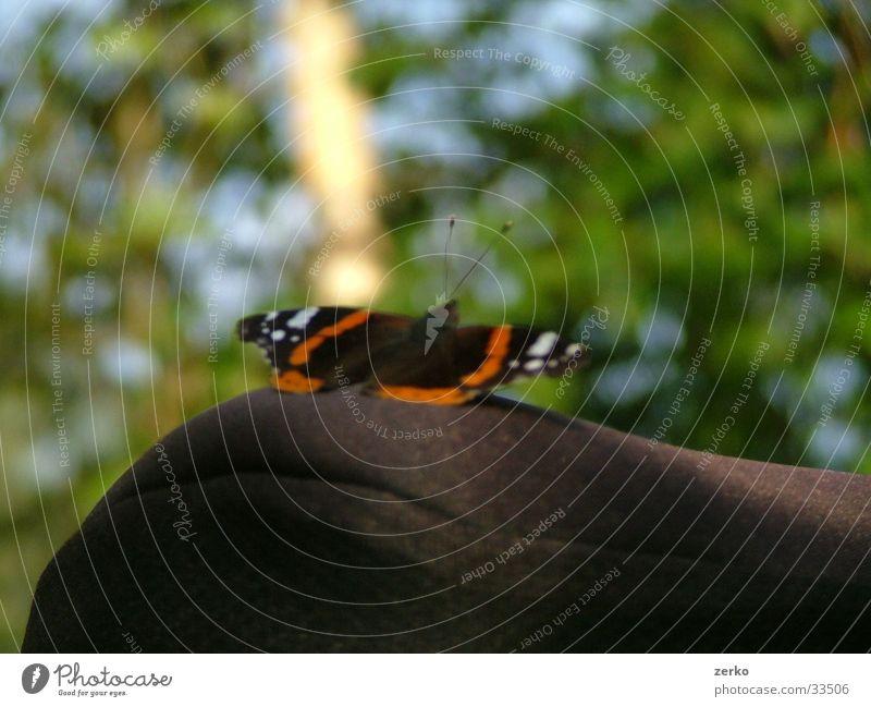 Schmetterling auf dem Rad... Fahrrad Fahrradsattel