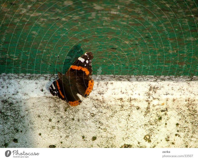 Schmetterling beim Sport... weiß grün Tischtennis Ping Tischtennisplatte