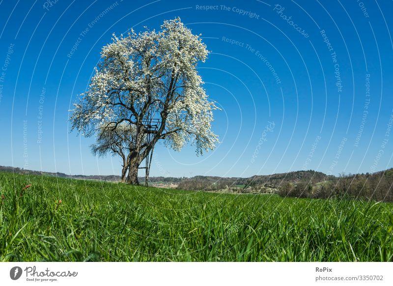 Im Gras an einem sonnigen Frühlingstag. Lifestyle Stil Gesundheit Wellness Leben harmonisch Meditation Freizeit & Hobby wandern Arbeit & Erwerbstätigkeit