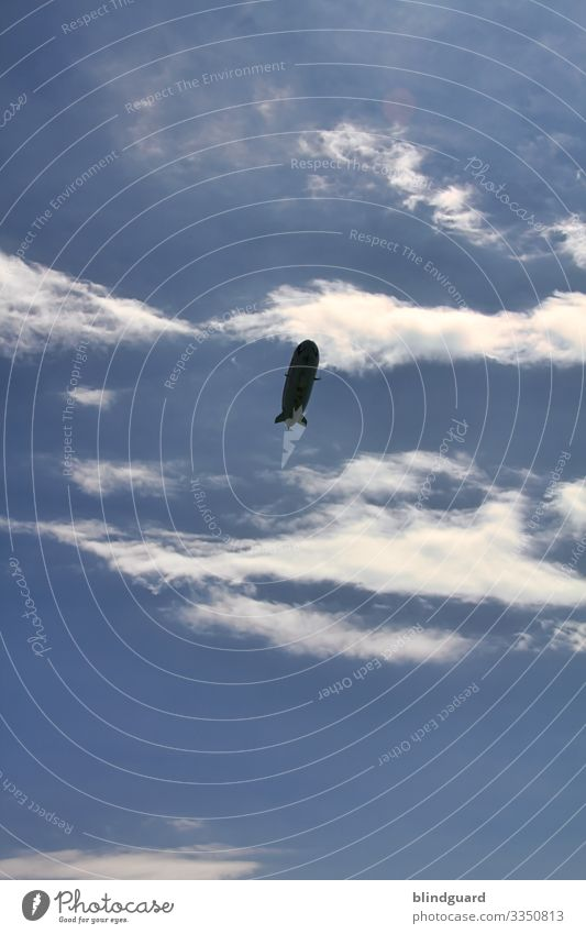 LED the ZEPPELIN fly Himmel Ferien & Urlaub & Reisen Sommer blau weiß Wolken schwarz Umwelt fliegen Ausflug Wetter Luftverkehr Abenteuer Schönes Wetter Klima
