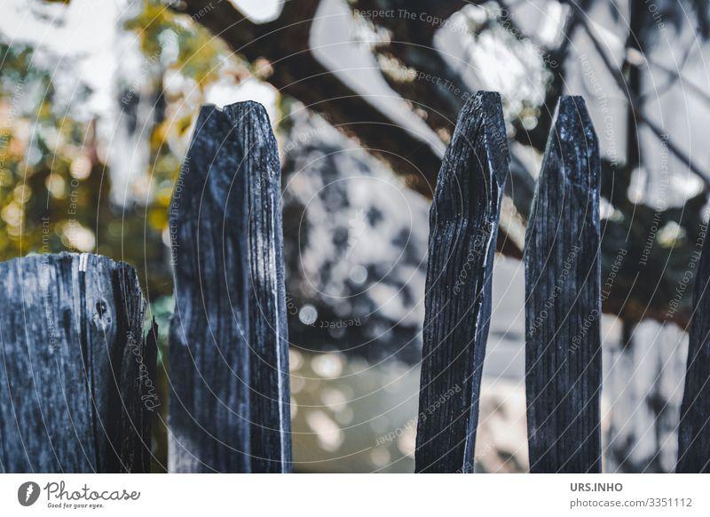 Holzzaun vorm Garten Baum Zaun Zaunpfahl alt Spitze gelb grau grün Idylle Reflexion & Spiegelung Ast Gartenzaun Farbfoto Gedeckte Farben Außenaufnahme