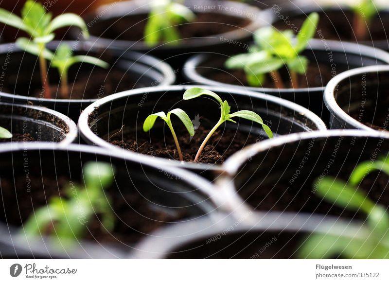 junge Dinger Frühling Sommer Pflanze Blume Gras Sträucher Moos Blatt Blüte Grünpflanze Nutzpflanze Topfpflanze dehydrieren Wachstum Pflanzenfresser