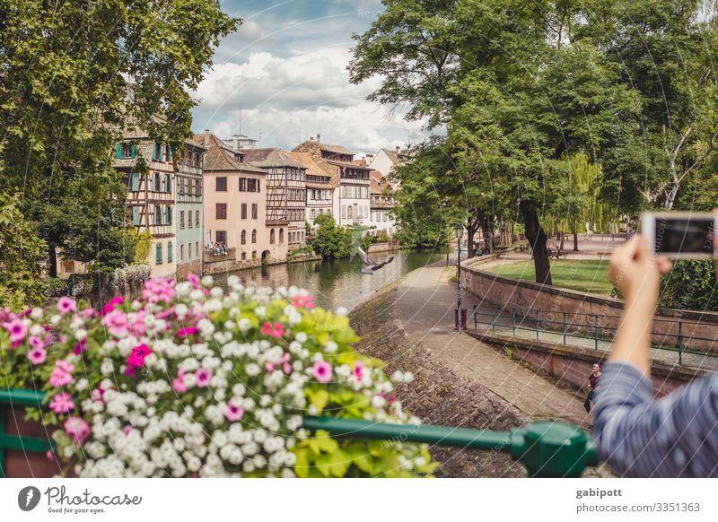 Städtetrip Strasbourg 3/5 Natur Himmel Sommer Wetter Schönes Wetter Blume Park Straßburg Frankreich Europa Stadt Stadtzentrum Altstadt Haus Brücke Gebäude
