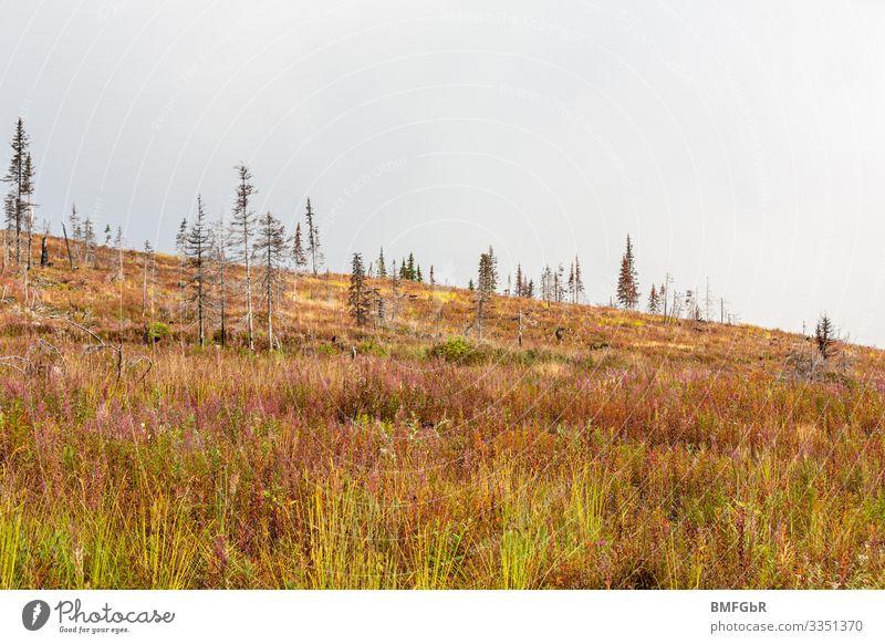 Neues Leben - Heidelandschaft die nach Waldbrand entstanden ist wandern Umwelt Natur Landschaft Pflanze Erde Herbst Klima Klimawandel Wetter schlechtes Wetter