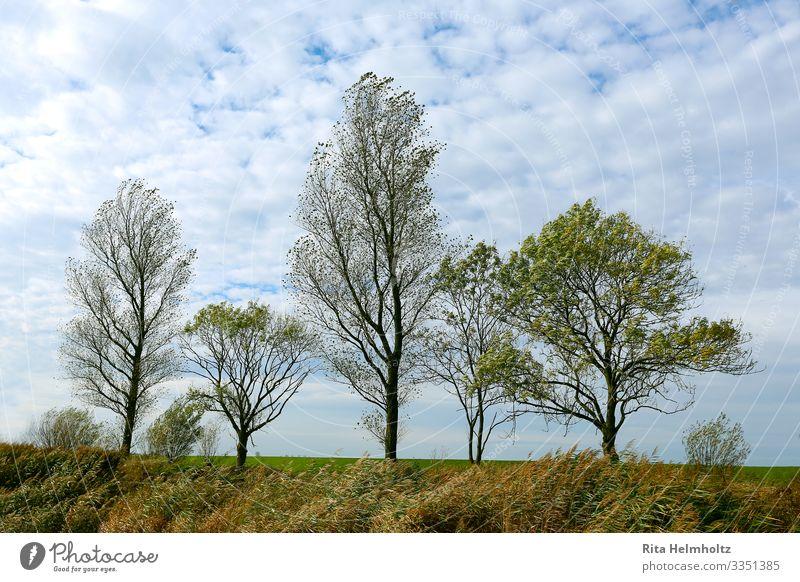 Baumreihe Umwelt Natur Landschaft Pflanze Himmel Wolken Frühling Schönes Wetter Wiese Wachstum frisch Unendlichkeit blau braun grün weiß schön geduldig ruhig