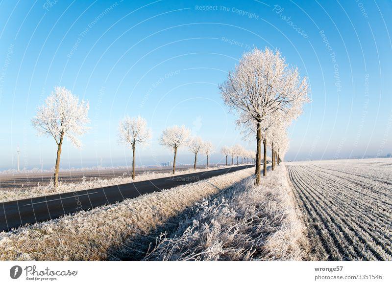 Eiszeit | Glitzer am Straßenrand Landschaft Pflanze Winter Frost Baum Feld Verkehrswege kalt blau braun weiß Raureif Schönes Wetter Blauer Himmel