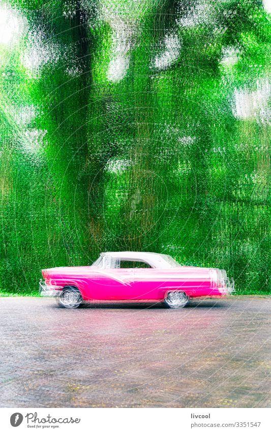Rosa Almendron in einem Park , Havanna - Kuba II Lifestyle Leben Ferien & Urlaub & Reisen Tourismus Ausflug Insel Garten Natur Baum Verkehr Straßenverkehr