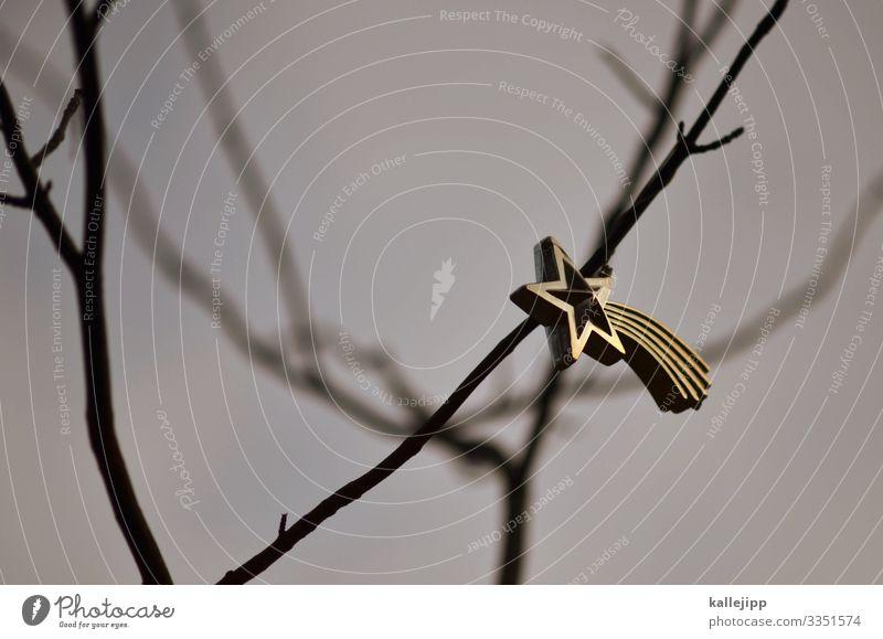 überbleibsel Feste & Feiern Weihnachten & Advent Umwelt Natur Baum leuchten Weihnachtsstern Baumschmuck Ast Stern Schmuckanhänger Gold einzeln einzigartig