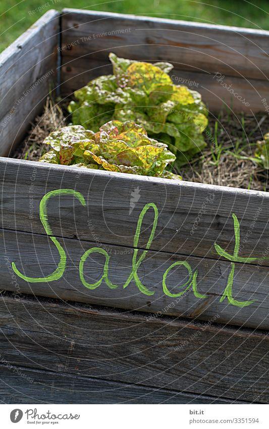Wörtlich genommen l Salat Beet Buchstaben Schriftzeichen Text Hochbeet Erde Garten Eigenanbau Ernte reif Grüner Daumen grün regional heimisch Pflanze Natur
