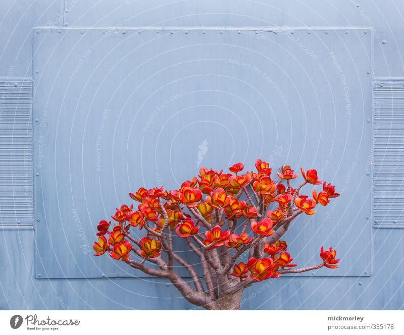 Offensichtliche Kontraste Natur blau Pflanze rot Blatt Umwelt Leben Blüte Stil Gesundheit Freundschaft außergewöhnlich authentisch Zufriedenheit Design