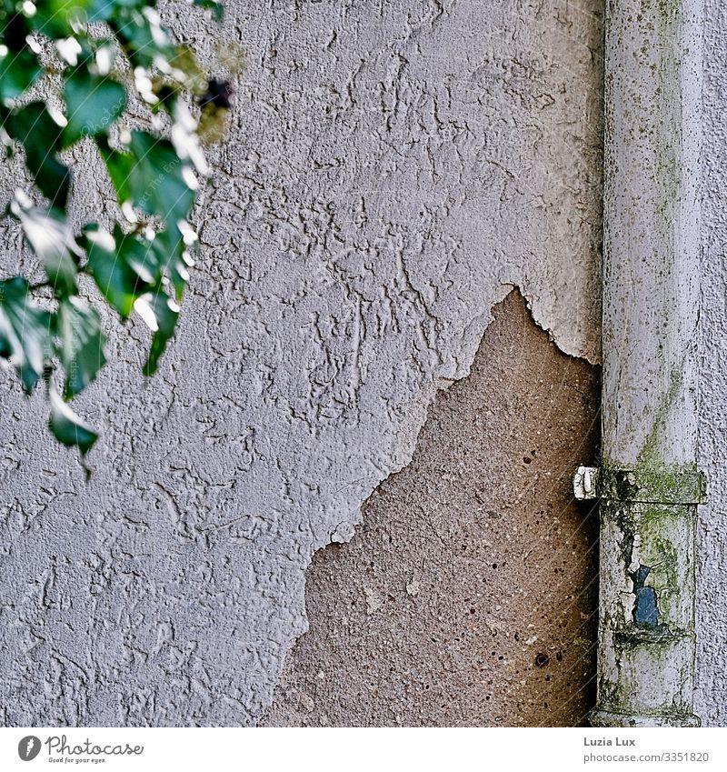 Regenrinne und bröckelnder Putz Kleinstadt Haus Mauer Wand Dachrinne Efeu Blatt alt kaputt verfallen Patina braun grau grün weiß Nostalgie Sentimentalit Verfall