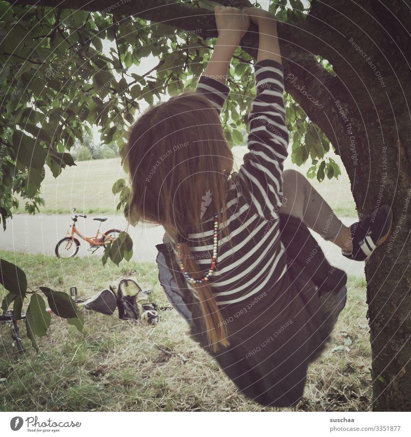 baum geklettert, kirschen gegessen. Kind Mädchen Baum Kirschbaum Kirsche Klettern Baumklettern Baumstamm Ast Blatt Zopf festhalten Fahrrad Sommer Außenaufnahme