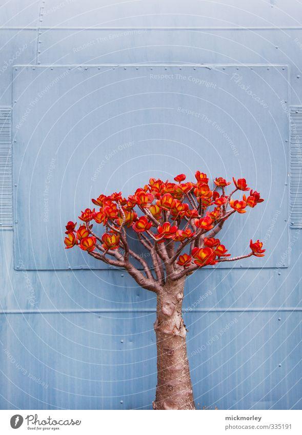 Chaos vs Kosmos Natur blau Pflanze rot Erholung Umwelt Glück Denken Gesundheit außergewöhnlich wild Zufriedenheit authentisch Abenteuer beobachten genießen