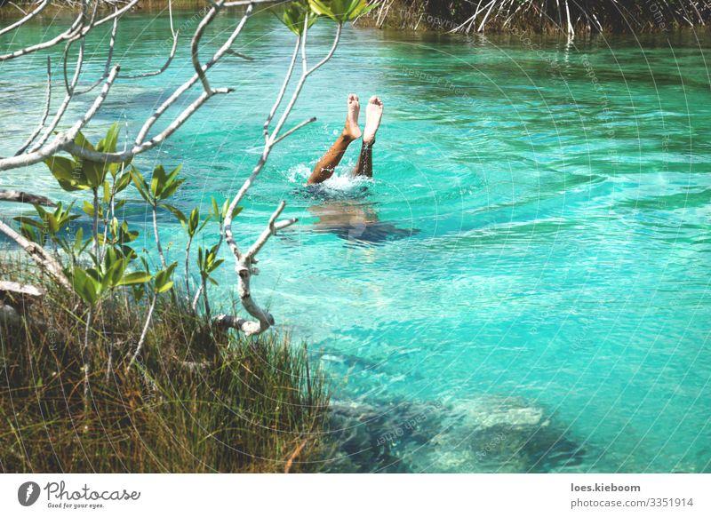 Diving into turquoise in Bacalar, Mexico Erholung Ferien & Urlaub & Reisen Tourismus Abenteuer Ferne Sommer Strand Sport Schwimmen & Baden Natur Sonne Sträucher
