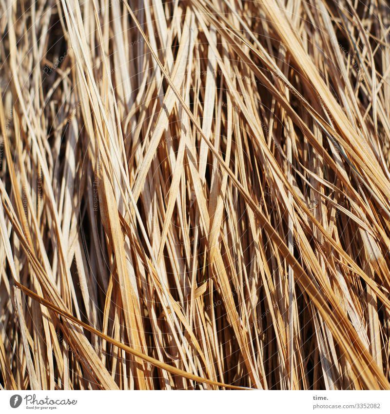 Hauptsache blond | wörtlich genommen sonnig gelb schatten sonnenlicht stroh gras gebündelt muster struktur rohstoff baumaterial natur linien leben zusammen