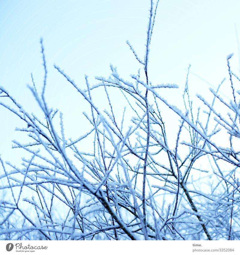 kind of puderzucker   Eiszeit Himmel Winter Schönes Wetter Schnee Pflanze Sträucher Ast hell kalt Stimmung Zusammensein Leben Ausdauer ästhetisch Inspiration