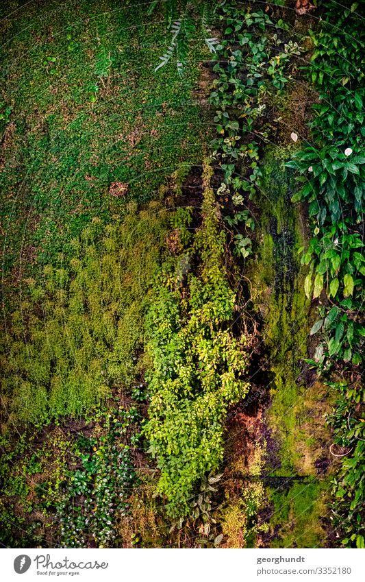 Vertikalwiese Umwelt Natur Pflanze Klima Klimawandel Blume Gras Sträucher Moos Efeu Farn Blatt Grünpflanze Garten Wiese Mauer Wand Fassade genießen grün hängend