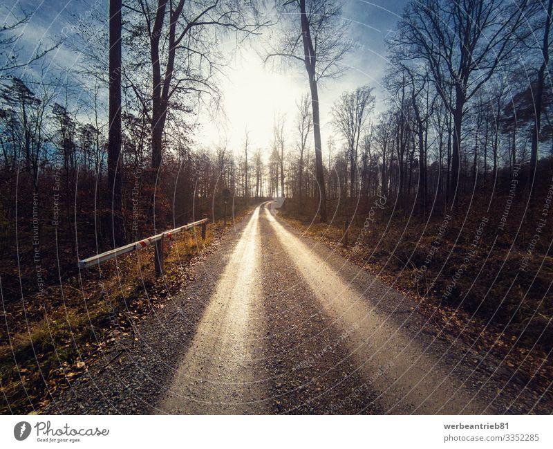 Langer Waldschutzweg, der zur Sonne führt ruhig Natur Landschaft Pflanze Erde Himmel Baum Verkehr Straße Wege & Pfade lang unbefestigter Weg Sonnenschein