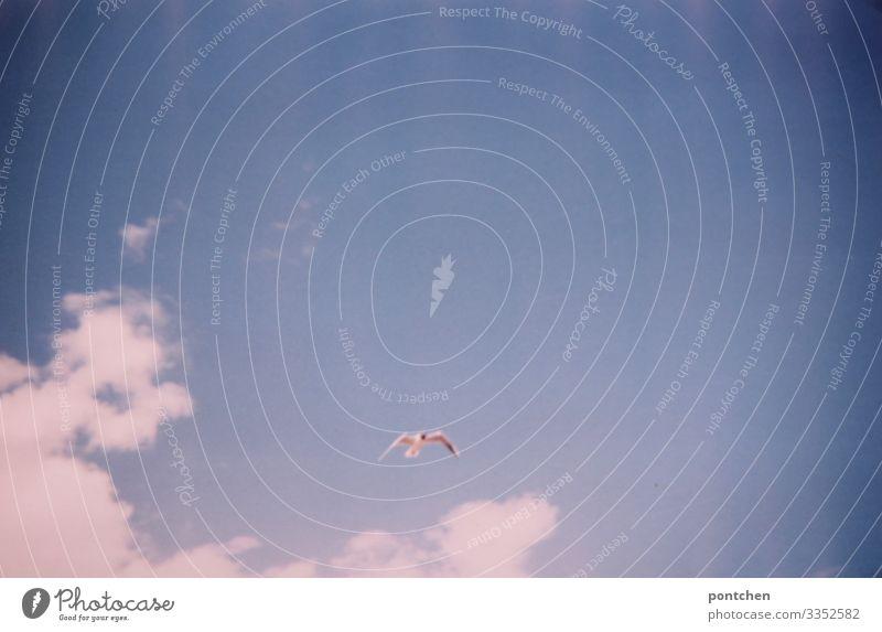 Möwe fliegt vor blauem Himmel mit Wolken Natur Urelemente Luft Sonnenlicht Sommer Tier Wildtier Vogel Flügel fliegen Freiheit Lebensraum Tierschutz Farbfoto