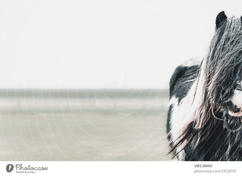 neugieriges Pferd auf der Weide Tier Nutztier 1 stehen warten grau grün schwarz weiß Tierliebe Pferdemähne Mähne Pferdeschnauze Schnauze Fell Farbfoto